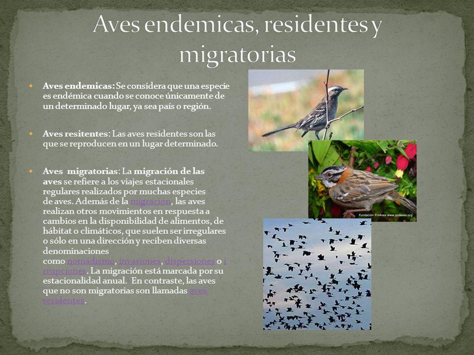 Aves endemicas, residentes y migratorias