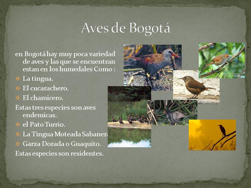 Aves de Bogotá en Bogotá hay muy poca variedad de aves y las que se encuentran estan en los humedales Como :