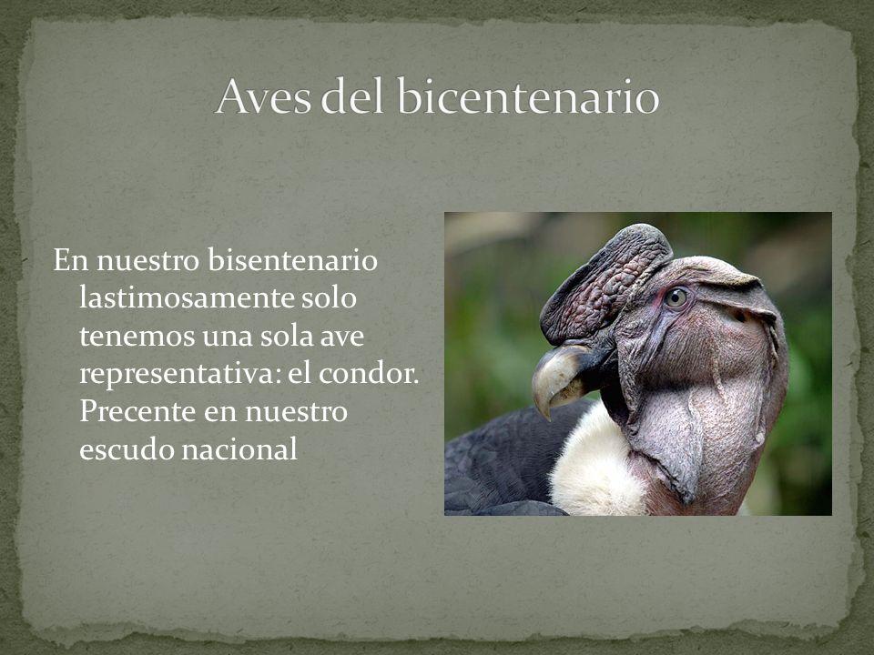 Aves del bicentenario