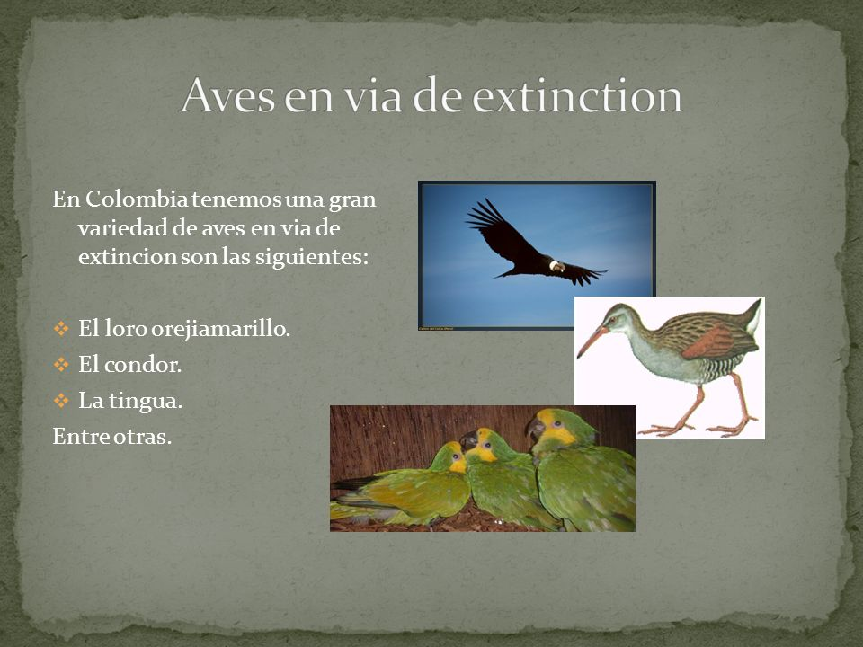 Aves en via de extinction
