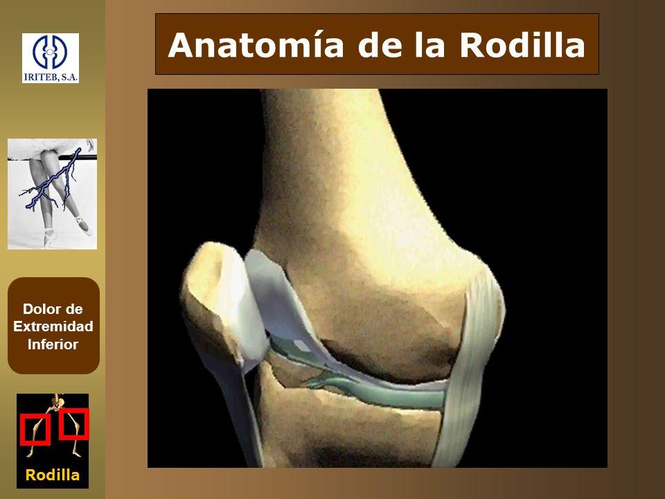Anatomía de la Rodilla Rodilla