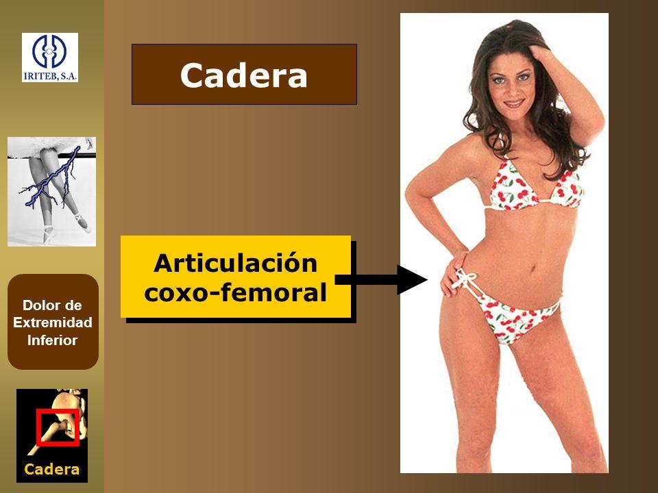 Cadera Articulación coxo-femoral Cadera