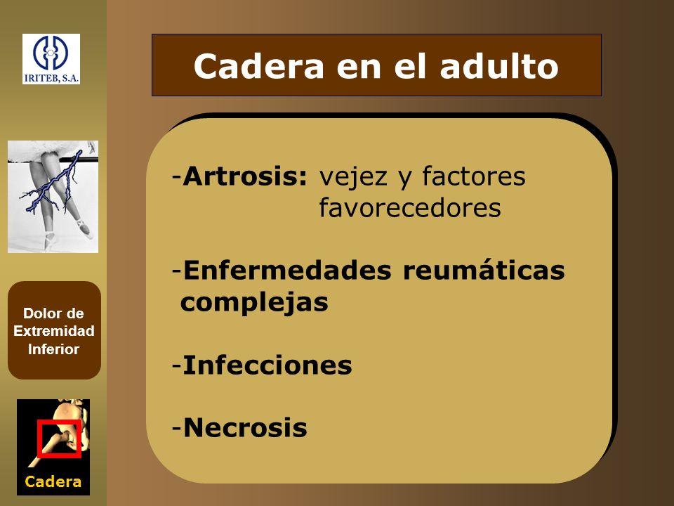 Cadera en el adulto Artrosis: vejez y factores favorecedores
