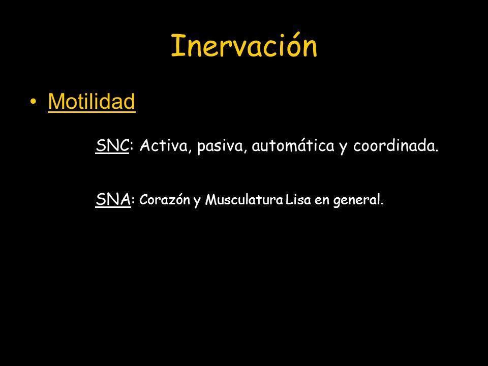 Inervación Motilidad SNC: Activa, pasiva, automática y coordinada.