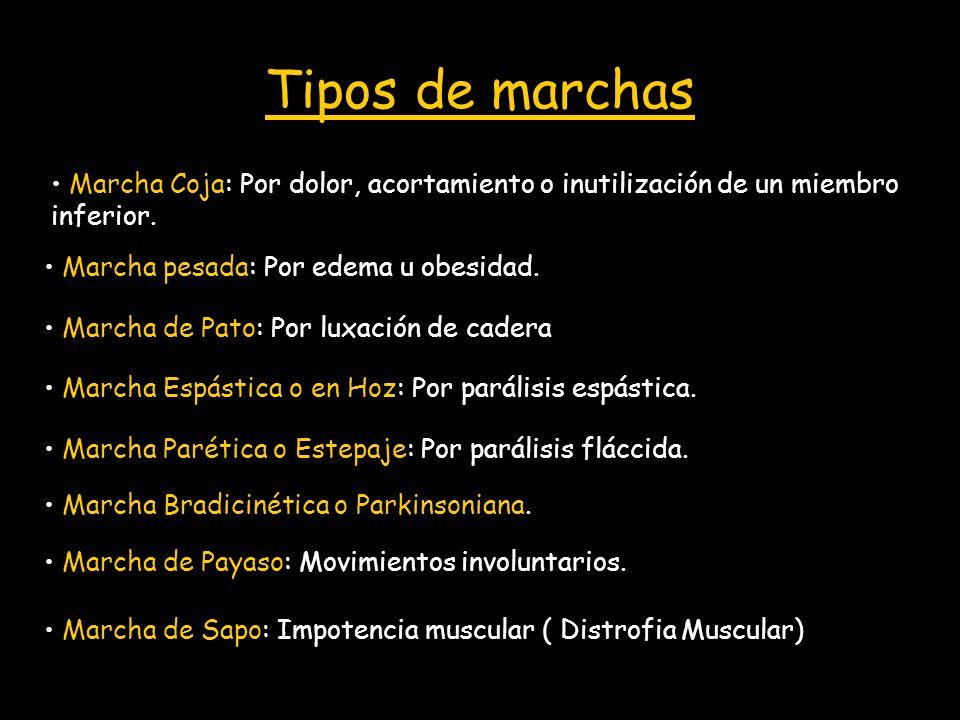 Tipos de marchas Marcha Coja: Por dolor, acortamiento o inutilización de un miembro inferior. Marcha pesada: Por edema u obesidad.