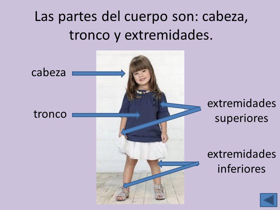 Las partes del cuerpo son: cabeza, tronco y extremidades.