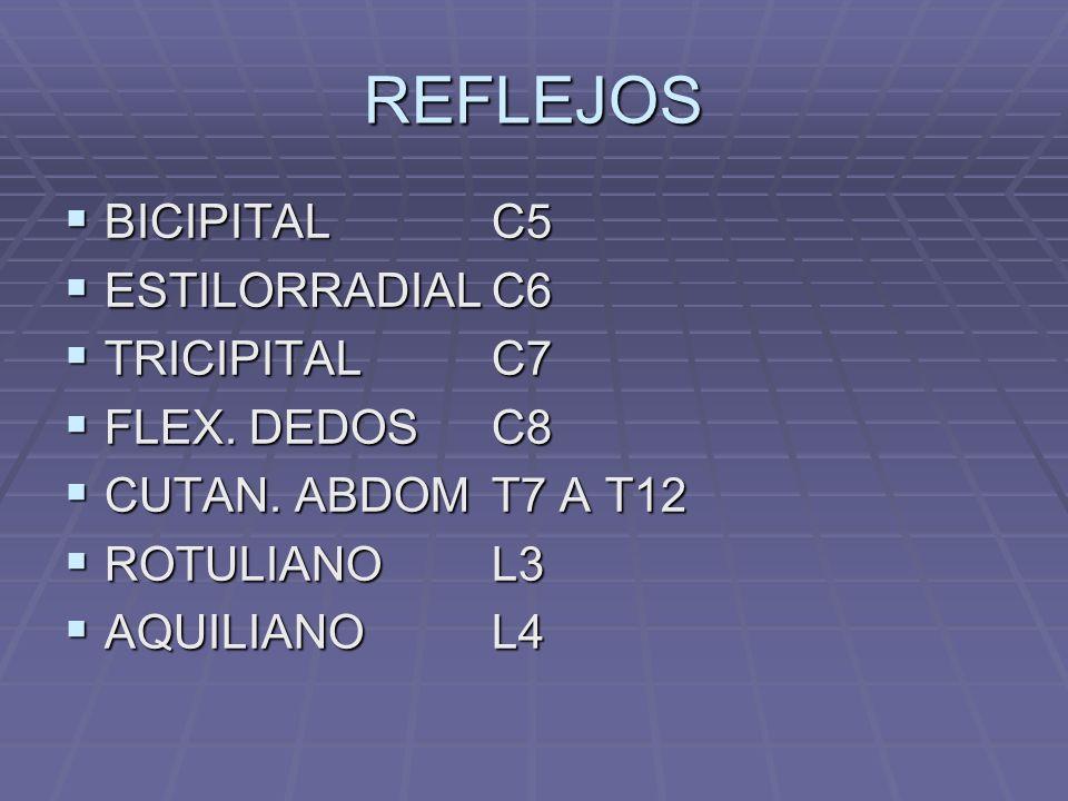 REFLEJOS BICIPITAL C5 ESTILORRADIAL C6 TRICIPITAL C7 FLEX. DEDOS C8