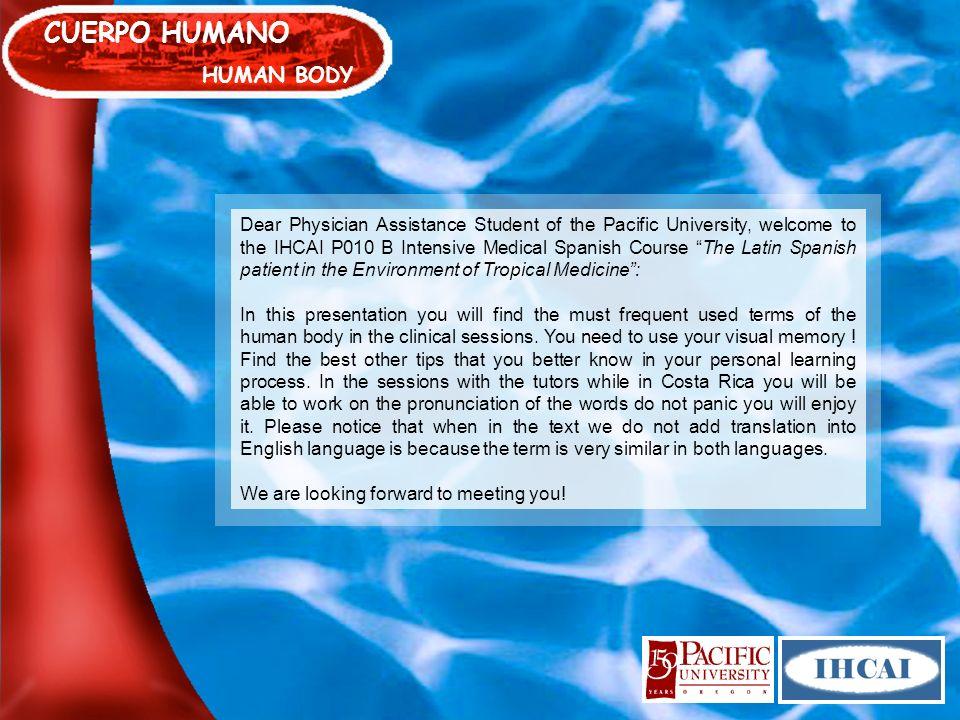 CUERPO HUMANO HUMAN BODY