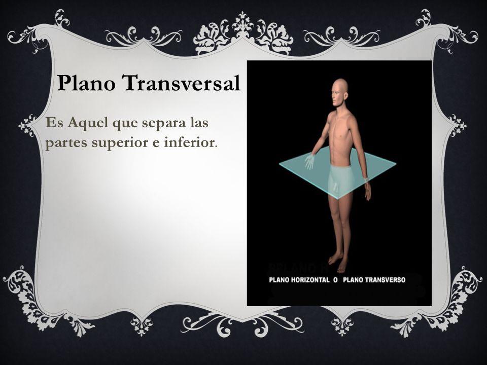 Plano Transversal Es Aquel que separa las partes superior e inferior.