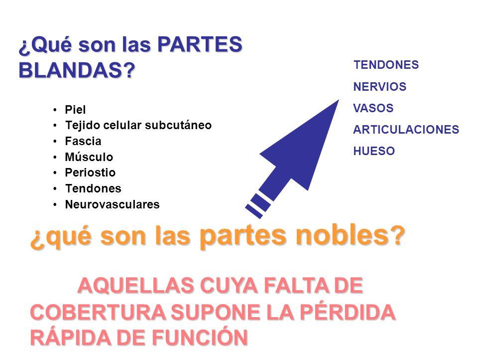 ¿qué son las partes nobles