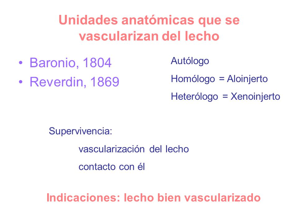 Unidades anatómicas que se vascularizan del lecho
