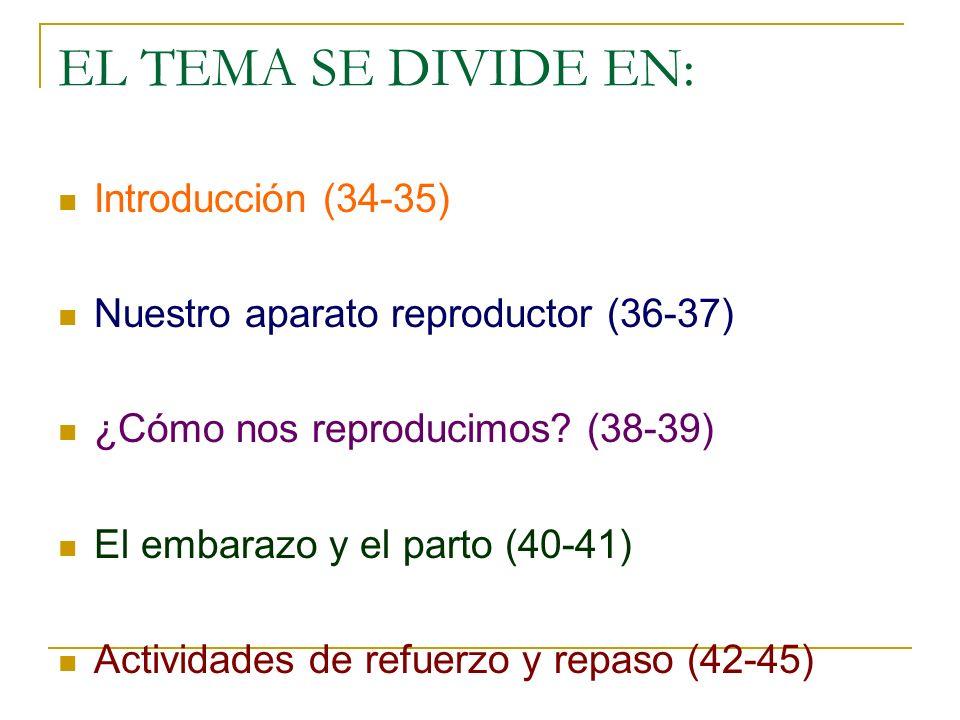 EL TEMA SE DIVIDE EN: Introducción (34-35)