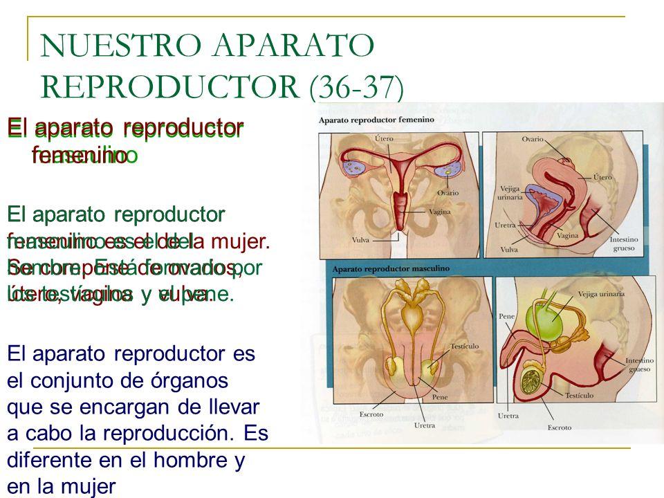 NUESTRO APARATO REPRODUCTOR (36-37)