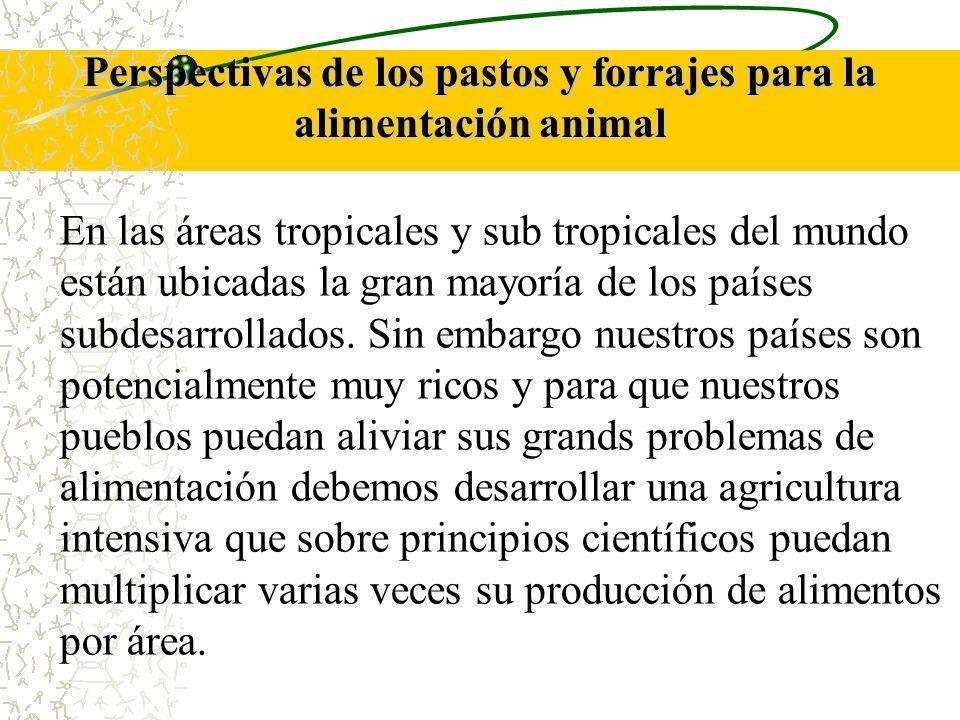 Perspectivas de los pastos y forrajes para la alimentación animal