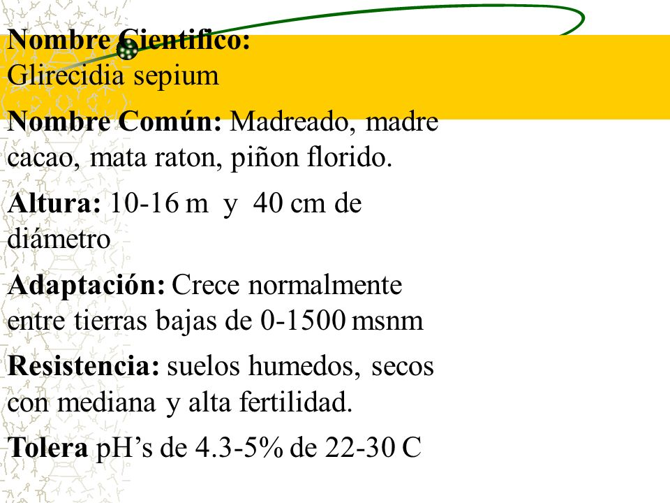 Nombre Cientifico: Glirecidia sepium. Nombre Común: Madreado, madre cacao, mata raton, piñon florido.