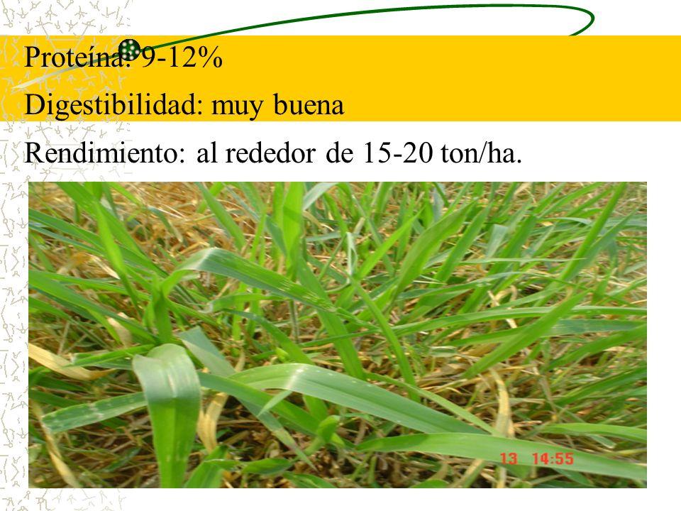 Proteína: 9-12% Digestibilidad: muy buena Rendimiento: al rededor de 15-20 ton/ha.