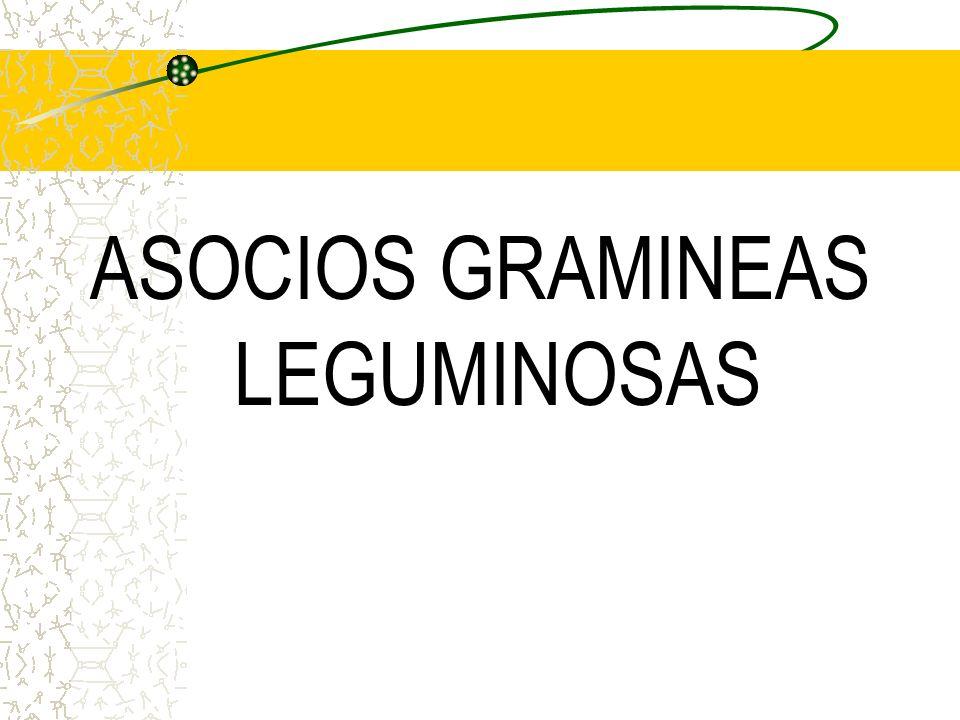 ASOCIOS GRAMINEAS LEGUMINOSAS