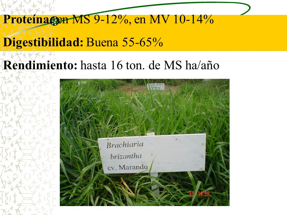 Proteína: en MS 9-12%, en MV 10-14%