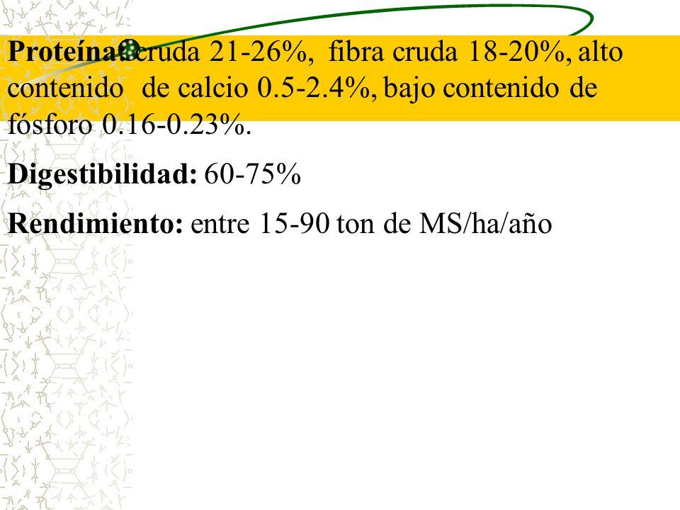 Proteína: cruda 21-26%, fibra cruda 18-20%, alto contenido de calcio 0