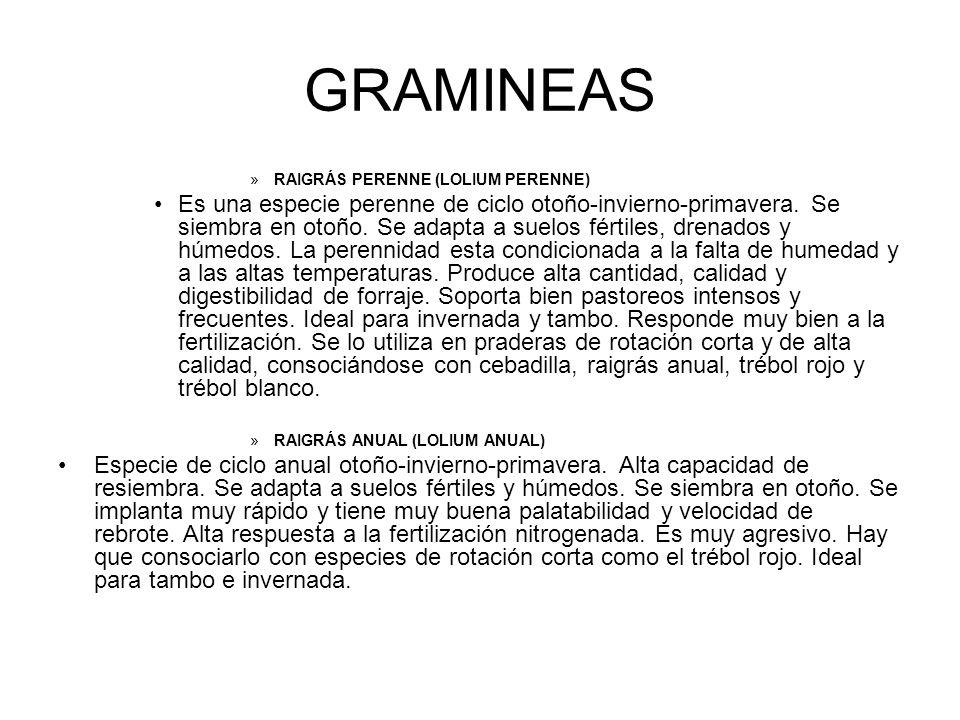 GRAMINEAS RAIGRÁS PERENNE (LOLIUM PERENNE)