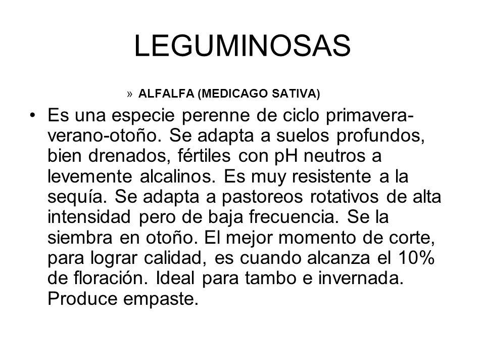 LEGUMINOSAS ALFALFA (MEDICAGO SATIVA)