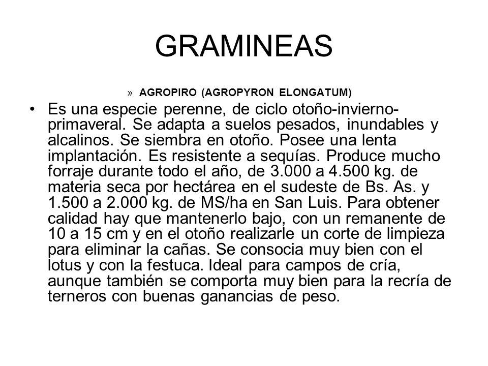 GRAMINEAS AGROPIRO (AGROPYRON ELONGATUM)