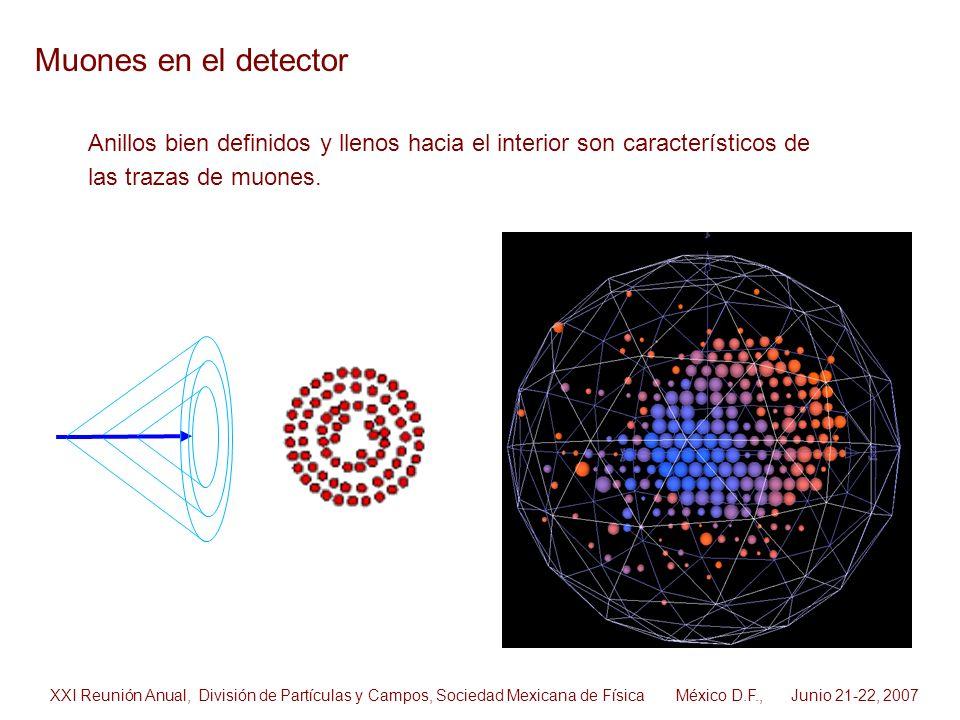 Muones en el detector Anillos bien definidos y llenos hacia el interior son característicos de. las trazas de muones.