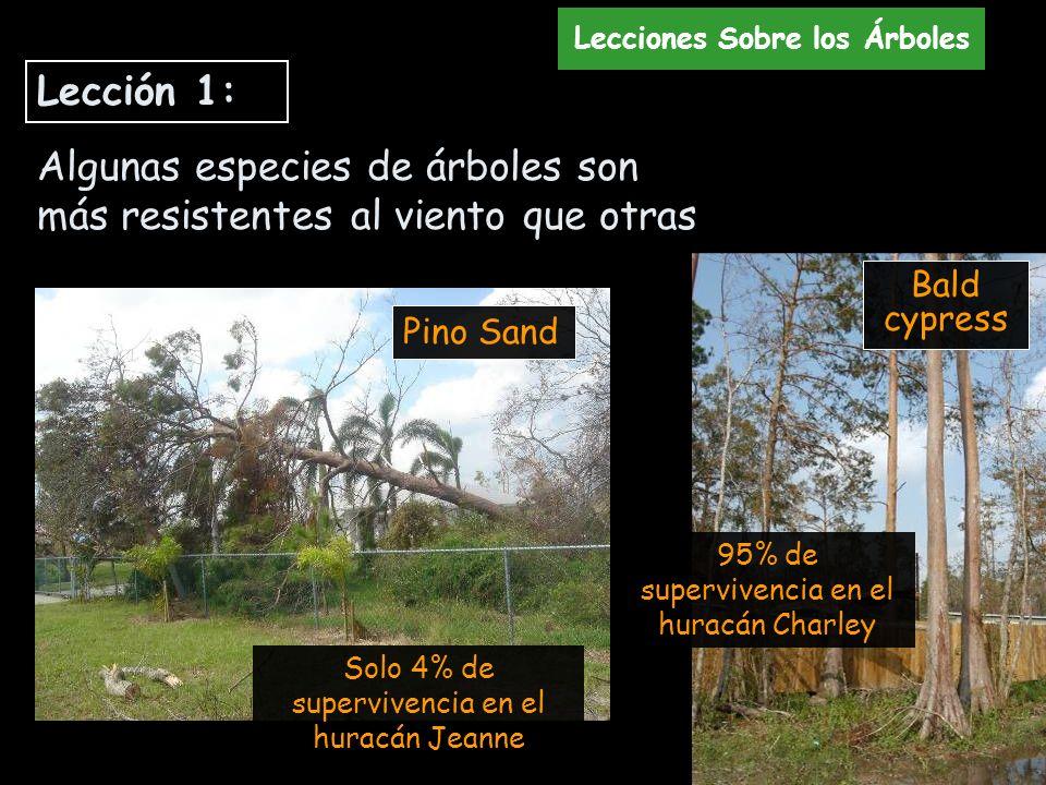 Algunas especies de árboles son más resistentes al viento que otras
