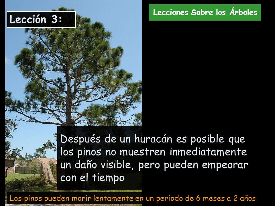 Lecciones Sobre los Árboles