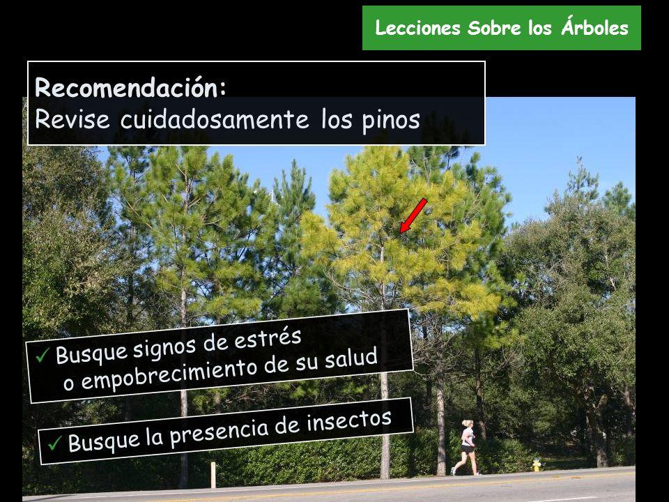 Recomendación: Revise cuidadosamente los pinos