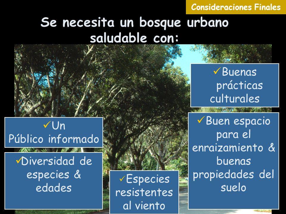 Se necesita un bosque urbano saludable con: