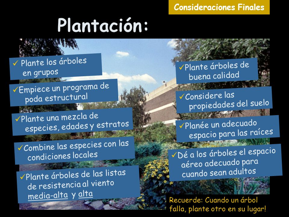 Plantación: Consideraciones Finales Plante los árboles