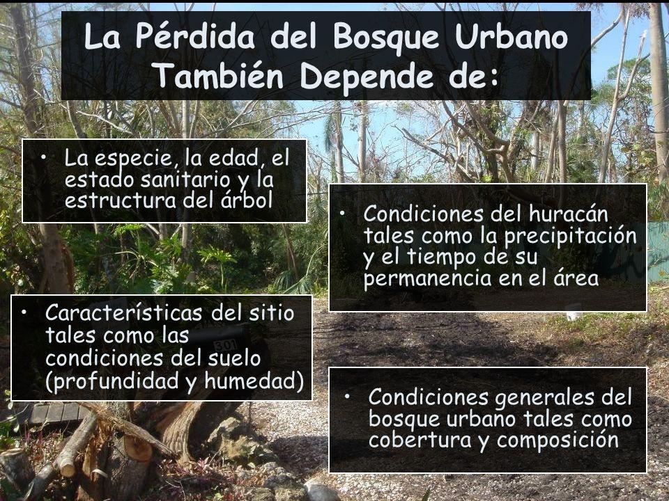 La Pérdida del Bosque Urbano También Depende de:
