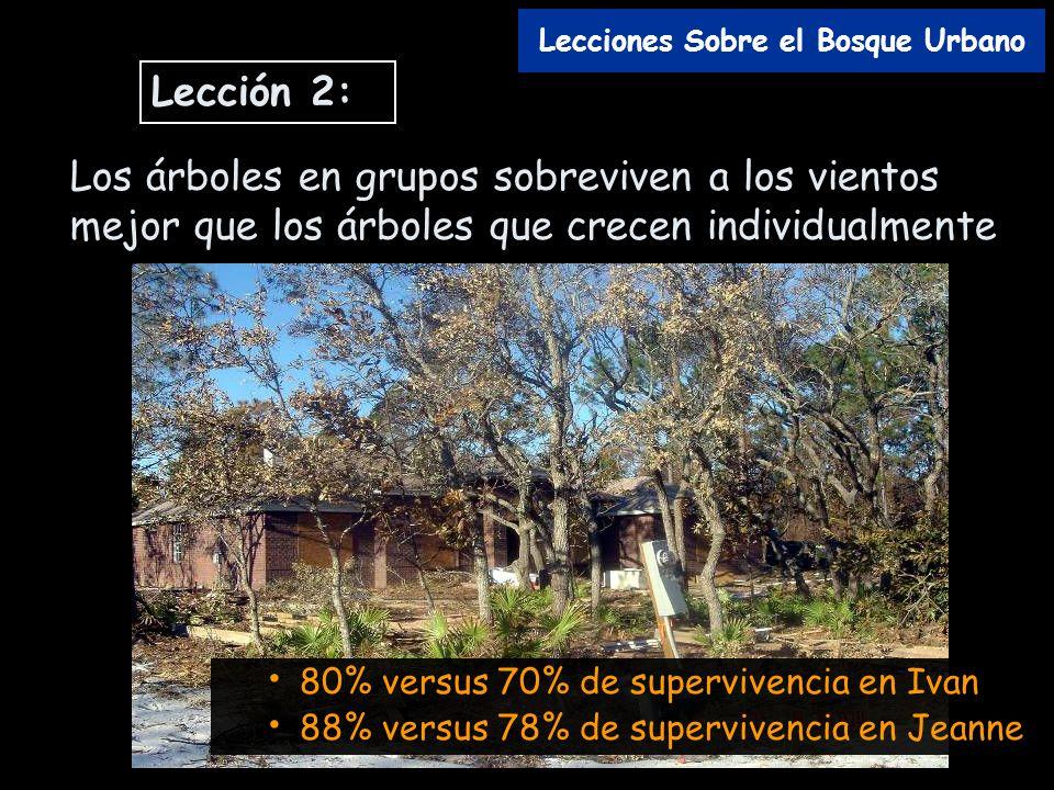 Lecciones Sobre el Bosque Urbano