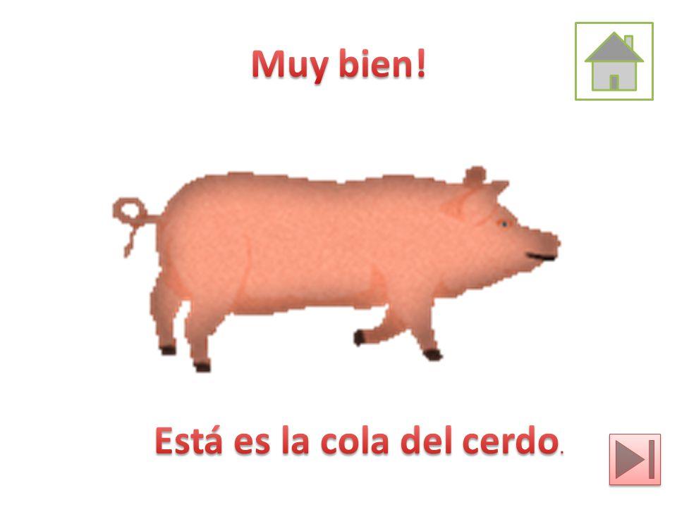 Muy bien! Está es la cola del cerdo.