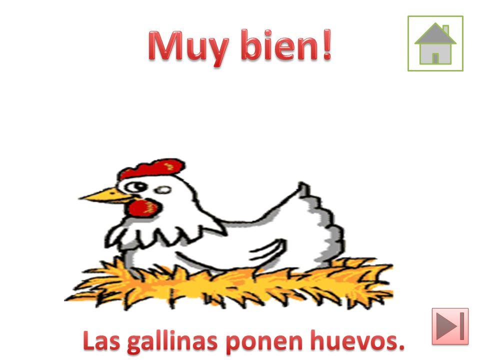 Las gallinas ponen huevos.