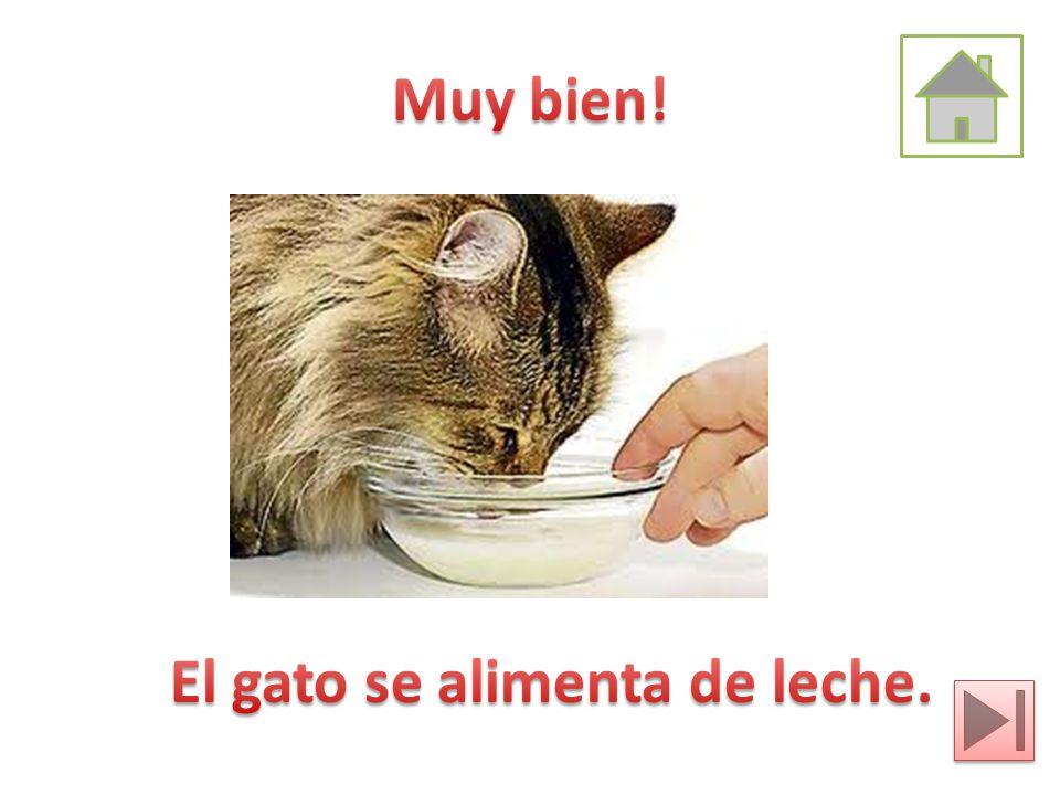 Muy bien! El gato se alimenta de leche.