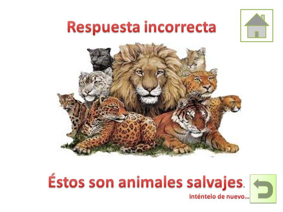 Éstos son animales salvajes.
