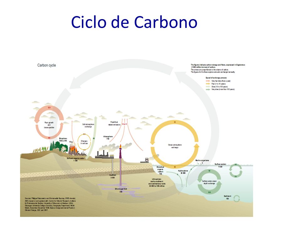 Ciclo de Carbono 8