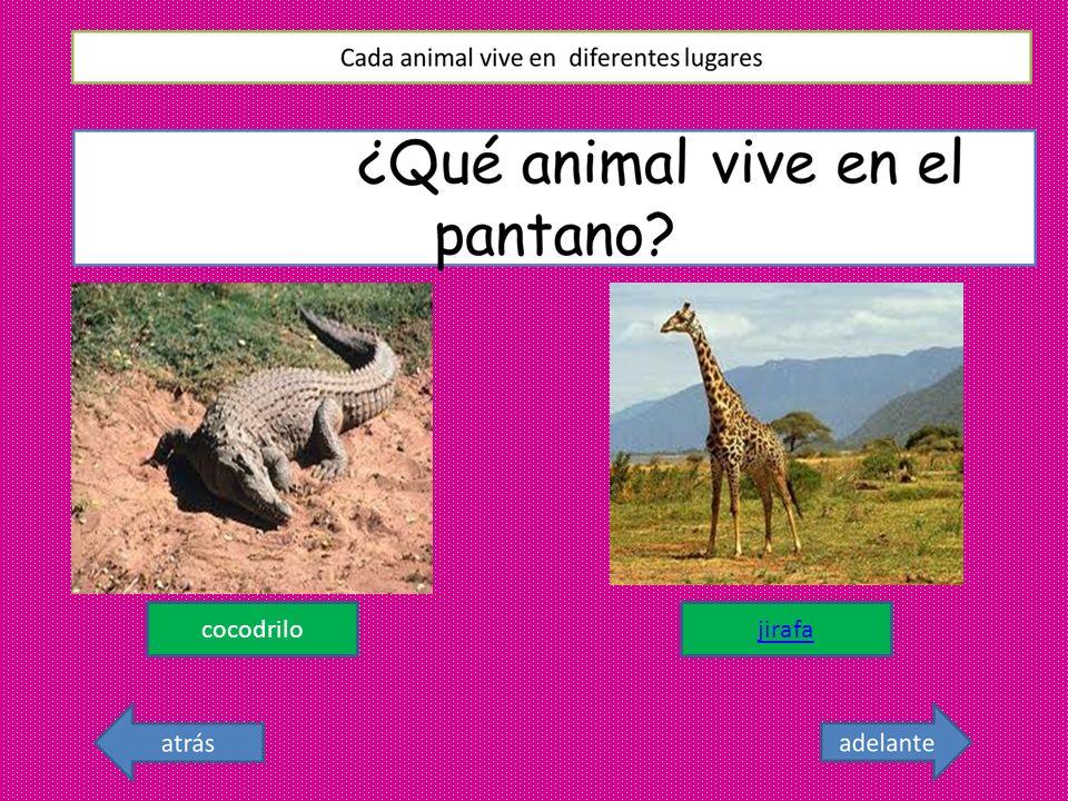 cocodrilo jirafa