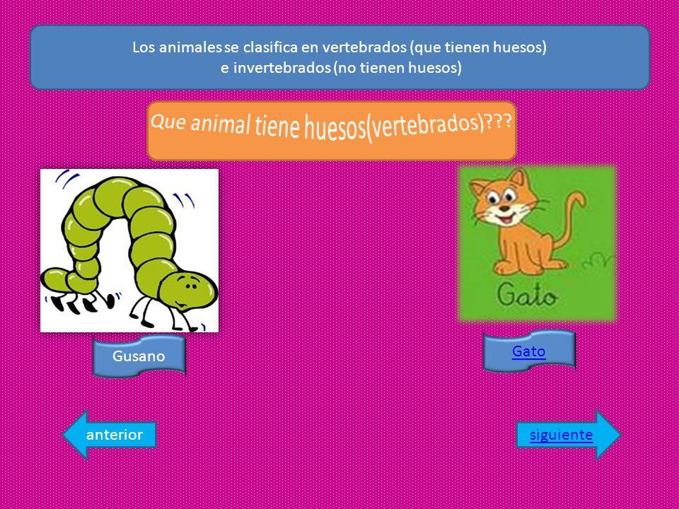Los animales se clasifica en vertebrados (que tienen huesos)