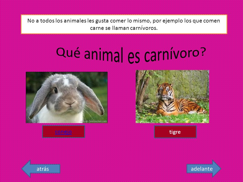 Qué animal es carnívoro