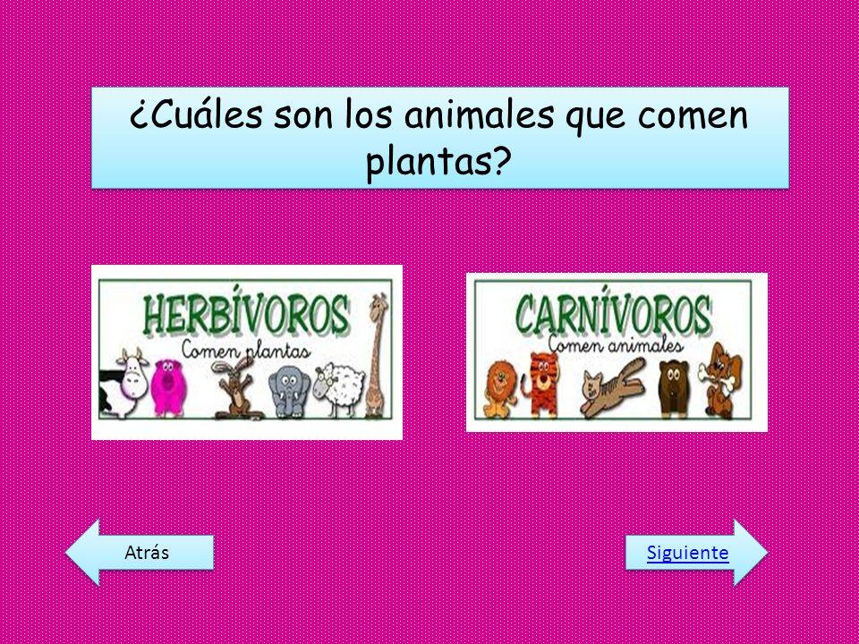 ¿Cuáles son los animales que comen plantas