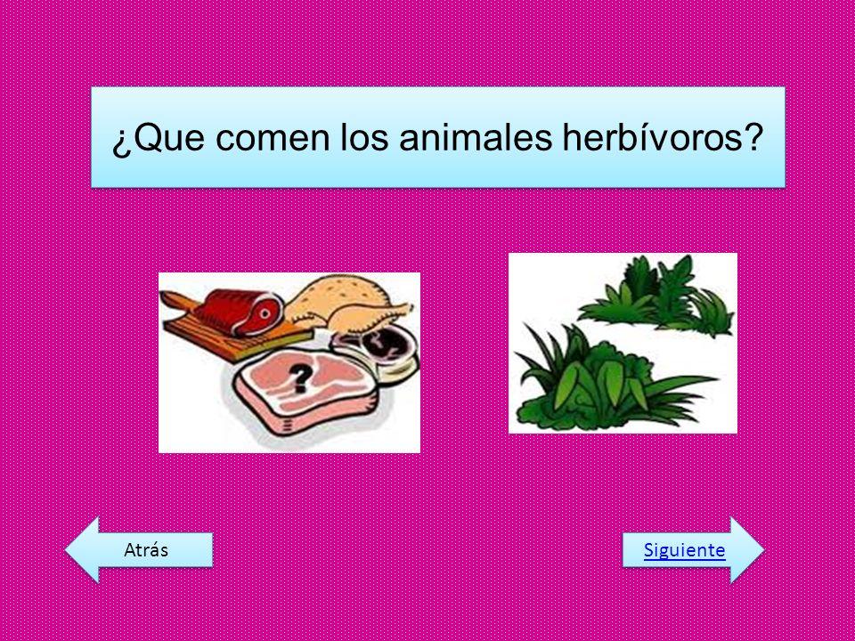 ¿Que comen los animales herbívoros