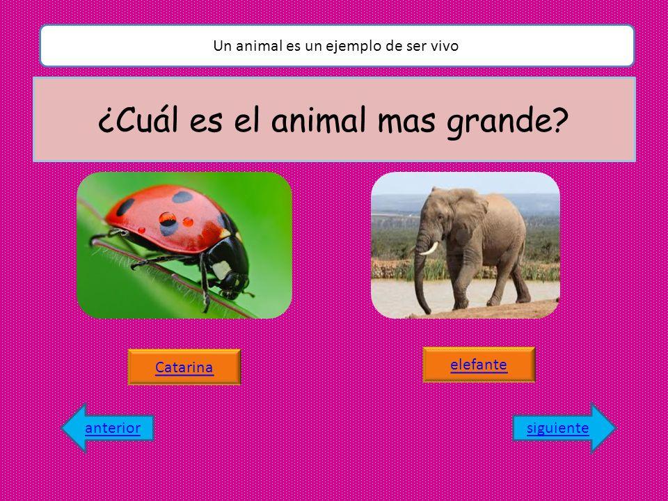 ¿Cuál es el animal mas grande