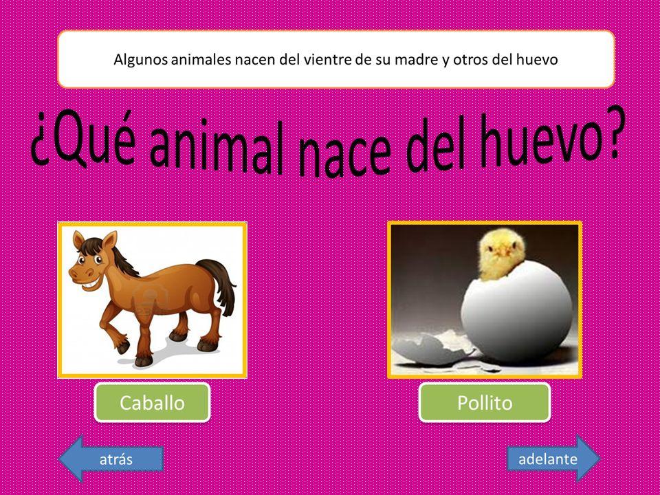 ¿Qué animal nace del huevo