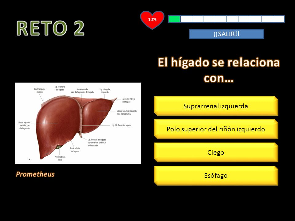 El hígado se relaciona con…