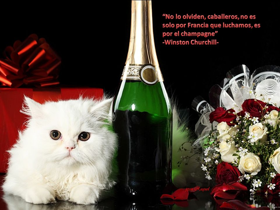 No lo olviden, caballeros, no es solo por Francia que luchamos, es por el champagne