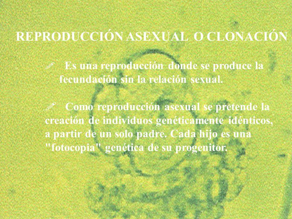 REPRODUCCIÓN ASEXUAL O CLONACIÓN