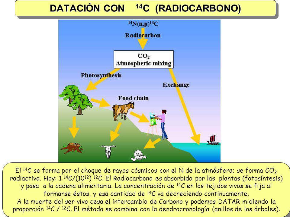 DATACIÓN CON 14C (RADIOCARBONO)